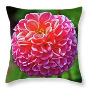 Pink Dahlia In Golden Gate Park In San Francisco, California  Throw Pillow