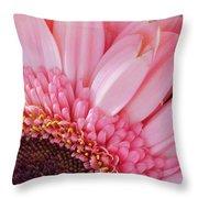 Pink Daisy Close-up Throw Pillow