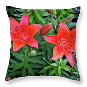 Pink Daylilies Throw Pillow