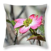 Pink Dogwood Throw Pillow by Kerri Farley