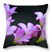 Pink Fairy Lilies Throw Pillow by Richard J Thompson