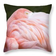 Pink Flamingo Hiding Its Head On Its Plumage. Throw Pillow