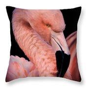Pink Flamingo Portrait Throw Pillow