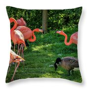 Pink Flamingos And Imposters Throw Pillow