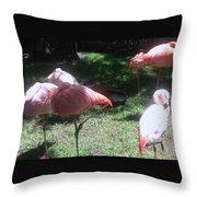 Pink Flamingos Resting Throw Pillow