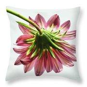 Pink Gazania Throw Pillow