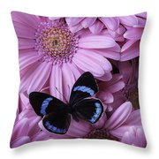 Pink Gerbera Daises And Butterfly Throw Pillow