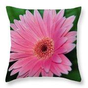 Pink Gerbera Delight Throw Pillow