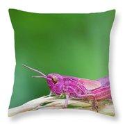 Pink Grasshopper Throw Pillow
