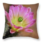 Pink Hedgehog Cactus Throw Pillow