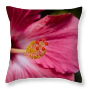 Pink Hibiscus Close-up Throw Pillow