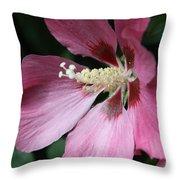Pink Hibiscus Cose -up Throw Pillow