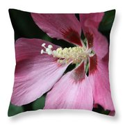 Pink Hibiscus Cose -up Throw Pillow