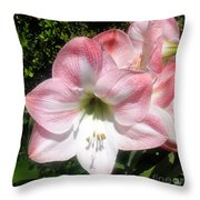 Pink Hippeastrum 01 Throw Pillow
