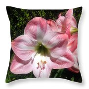 Pink Hippeastrum 02 Throw Pillow