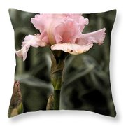 Pink Iris Throw Pillow