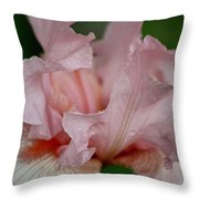 Pink Iris Study 2 Throw Pillow