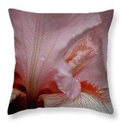 Pink Iris Study 5 Throw Pillow