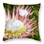 Pink King Protea Flowers Throw Pillow