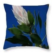 Pink King Protea Kula Maui Hawaii Throw Pillow