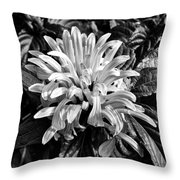Humble Throw Pillow