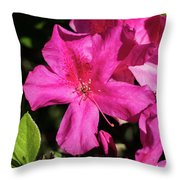 Pink Lilies Blooming Throw Pillow