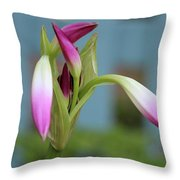 Pink Lily Bud Throw Pillow