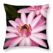 Pink Lotus Blossoms Throw Pillow