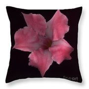 Pink Mandeville On Black Throw Pillow