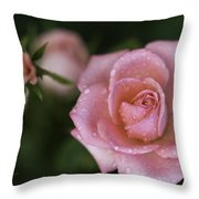 Pink Miniature Roses 3 Throw Pillow