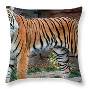 Pink Nosed Tiger Throw Pillow