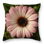 Pink Osteospermum Throw Pillow