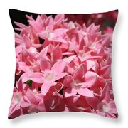 Pink Pentas Beauties Throw Pillow