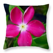 Pink Periwinkle Flower 1 Throw Pillow
