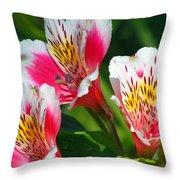 Pink Peruvian Lily 2 Throw Pillow