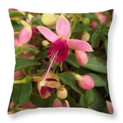 Pink Petalled Fuchsia Blooms              May         Indiana Throw Pillow