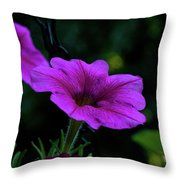 Pink Petunia, Dusk, Hunter Hill, Hagerstown, Maryland, July 25,  Throw Pillow