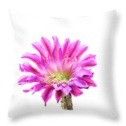 Pink Piazza Blooms  Throw Pillow