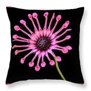 Pink Pinwheel Throw Pillow