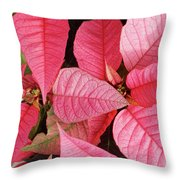 Pink Poinsettias Throw Pillow