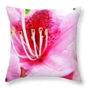 Pink Rhodie Flowers Art Prints Canvas Rhododendrons Baslee Troutman Throw Pillow