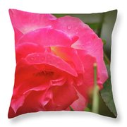 Pink Rose Throw Pillow by Kelly Hazel