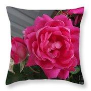 Pink Roses 2 Throw Pillow