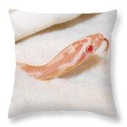 Pink Snake Throw Pillow