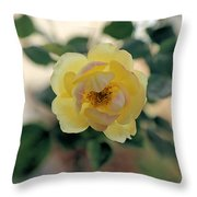 Pink Tipped Yellow Rose Throw Pillow