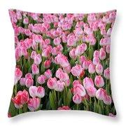 Pink Tulips- Photograph Throw Pillow