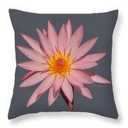 Pink Water Lily Transparent Throw Pillow