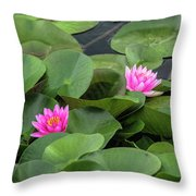 Pink Waterlilies Throw Pillow