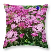 Pink Yarrows Throw Pillow
