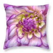 Pink Zinnia Close Up Throw Pillow